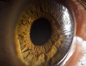 ojo-ventana-del-alma