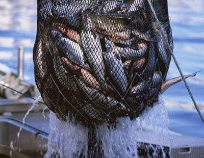 red con peces texto biblico